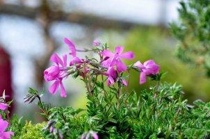 멋진 배경 (꽃)