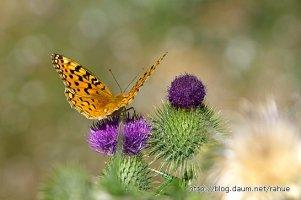 아름다운 꽃과 나비