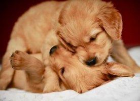귀여운 강아지 이미지