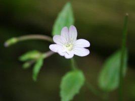 아름다운꽃