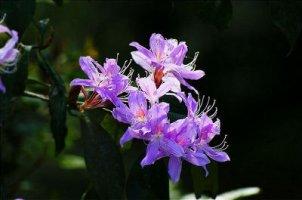 세상에서 가장 아름다운 진달래꽃