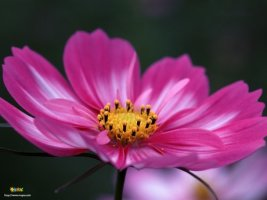 멋진 꽃 사진 모음