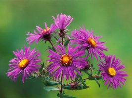 아름다운 꽃 배경화면 4