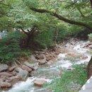 구례화엄사 반달곰 문수사 화개장터 지리산 힐링장소