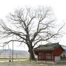 [사진으로 보는 평택의 비지정 문화유산 이야기14]정하교 효자정문