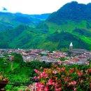 콜롬비아 양봉