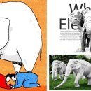 흰 코끼리(A white elephant)