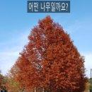 [전북 전주 명소] - '가을에 만난 '한국도로공사 수목원'