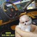 연예인 양세형 강아지 파티 포메라니안 털관리!