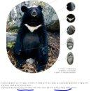 무책임하게 반달곰을 풀어놓는 환경부 공무원들