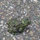 무당개구리