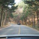 오대산 월정사 전나무숲길