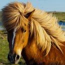 [말사진] 내가 살아가면서 만났던 모든 말사진(Horse)모음...