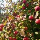 산딸나무 열매 효능은