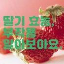 딸기 효능 알아보아요.