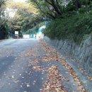 윤산/단풍 들기전 떨어진 가을 낙엽들