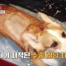 [<b>VIP</b> <b>TV</b>] YTN 사이언스 '애니멀 시그널'에 나온 강아지 후지마비 증상, <b>VIP</b>한방재활센터 치료 이야기