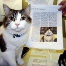 (미스테리) 저승사자 고양이 오스카
