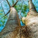 경상북도환경연수원 숲해설가 교육 수료생 40명 배출 비결은?