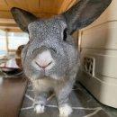 <b>뉴</b><b>토끼</b> 허브 제대로 즐겨보기