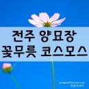 전주 양묘장 코스모스 꽃무릇(상사화)