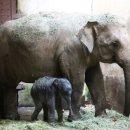 스리랑카 노동자 품었더니... 코끼리 선물에 새끼까지 출산 (노동자의 삼촌이...