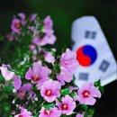 Re:365일 幸運/ 맑고 향기롭게/ 무궁화꽃이 피었습니다