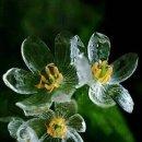 1일1꽃::스켈레톤플라워::/산하엽