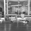 학대로 인해 불구가 된 새끼고양이를 입양한 가수 김완선 (후속영상)