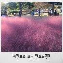 [전주]핑크뮬리 한국도로공사 수목원 (쉬는날,관람시간)