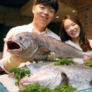 도시어부 왕포 낚시 대상어 수조기, 민어, 부세, 참조기 종류. 백조기 채비 미끼