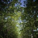 전주 가볼만한곳 여행, 한국도로공사 수목원