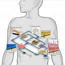 3D바이오프린팅의 진화 - 세포까지 출력한다!