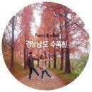진주 경상남도 수목원 단풍, 부산 근교 메타세쿼이아길이 예쁜 가을 여행지!
