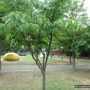 산딸나무 열매, 취과