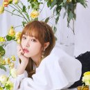 아이즈원 최예나/이채연/김채원 프로필!