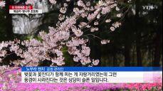 日 외래종 하늘소 때문에 사라진 '왕벚나무' 풍경