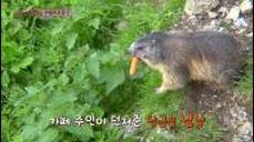 쯔뵐퍼호른산 정상에서 만난 귀요미 마못 ′찰리′ (순재할배 취향저격♡)